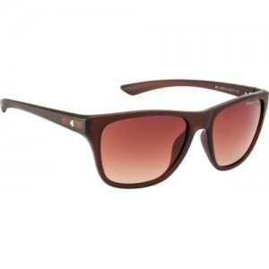 70761f75d83 Farenheit Cat-eye Sunglasses. 809 4499. Buy Now · Farenheit Wayfarer  Sunglasses