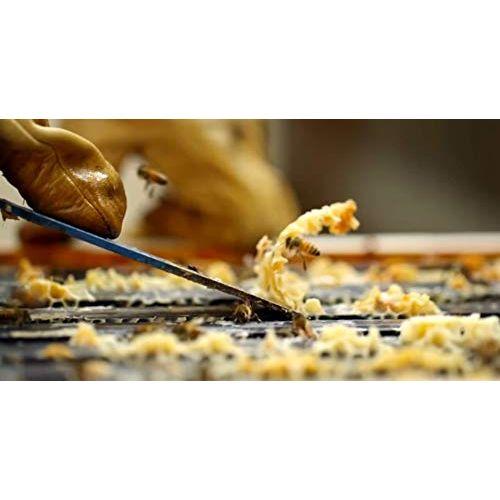 DADEV Forest Unprocessed Raw Honey